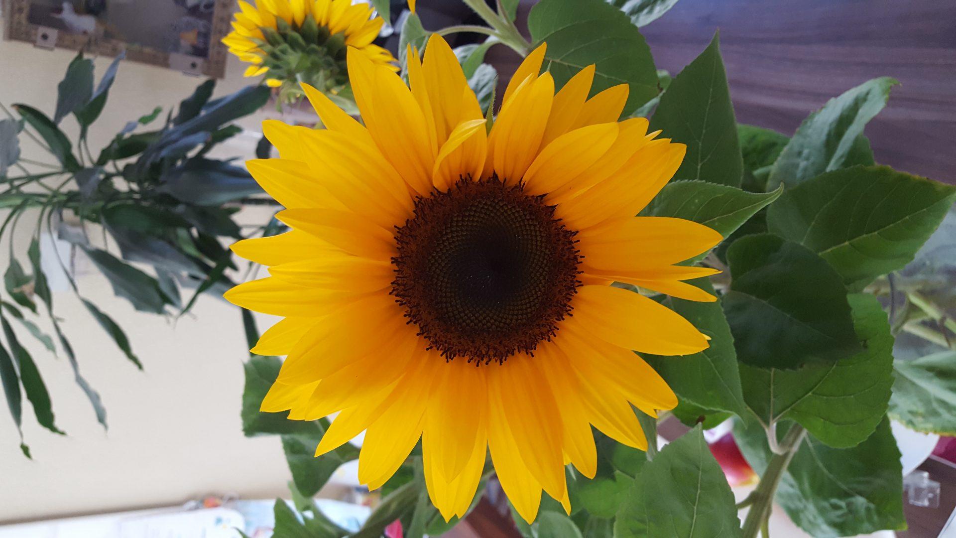 Sonnige und erholsame Sommerferien